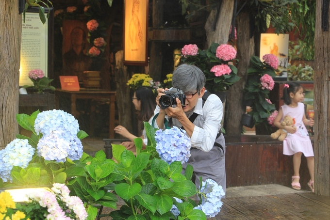 Vườn hoa cẩm tú cầu đang hút khách ở Huế