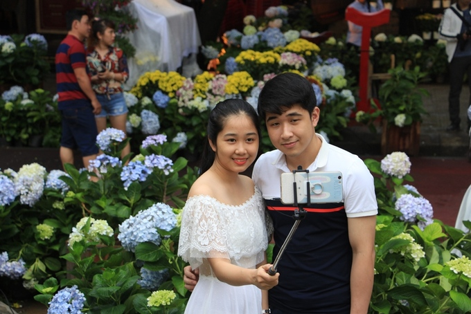 Vườn hoa cẩm tú cầu hút khách ở Huế
