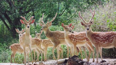 Du khách còn có thể chinh phụchệ thống hang động kỳ thú, hay tham quan những vườn cây nhiệt đới và nông trại.