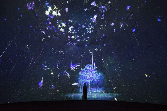 Triển lãm 'Chuyện kể rừng sâu' hút khách ở Singapore