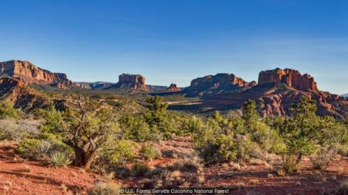 Mùa xuân đã đến ở thung lũng Verde ở Arizona. Ảnh:US Forest Service Coconino National Forest.