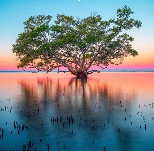 Bờ biển Nudgee, Brisbane.Ở Brisbane, nếu bạn muốn tìm một nơi để ngắm hoàng hôn gần trung tâm thành phố, có lẽ không nơi nào lý tưởng hơn bờ biển Nudgee. Hãy kiên nhẫn chờ đợi để ngắm nhìn ánh nắng vàng rực chiếu xuống, tạo nên những sắc màu rực rỡ và hình ảnh ngoạn mục của những cây rừng ngập mặn phản chiếu từ mặt nước.
