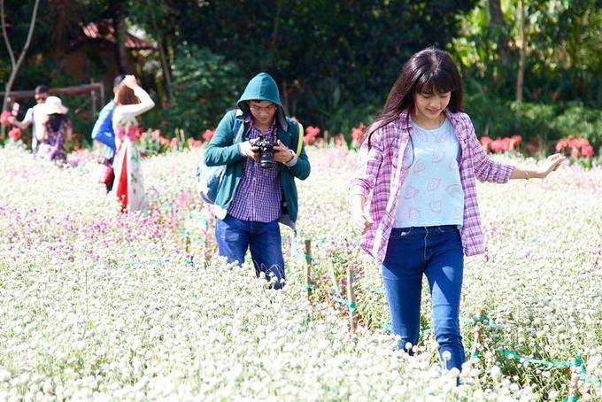 Vườn hoa hút khách chụp ảnh giữa nắng hè ở Tiền Giang