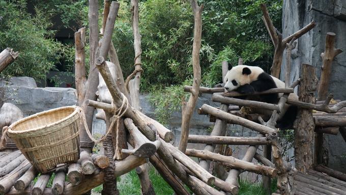 Bên trong công viên gấu trúc khổng lồ ở Trung Quốc