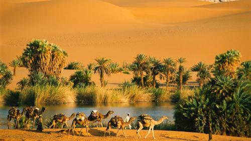 Ngày nay, giữa sa mạc Sahara vẫn còn các ốc đảo nhỏ. Ảnh:
