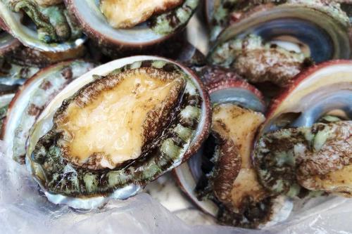 Bào ngư là món đặc sản phổ biến trên đảo Cô Tô. Ảnh: halongtourism.