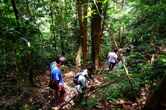 Trekking xuyên rừng Ba Vì trên cung đường mới