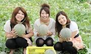 Vườn dưa lưới Nhật chỉ nhận 50 khách đến thu hoạch mỗi ngày