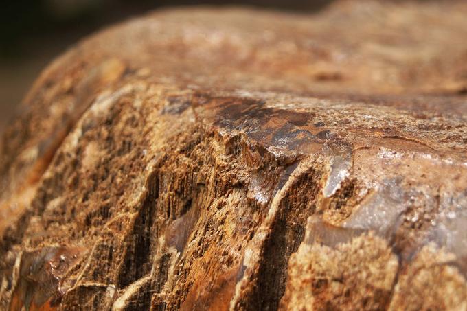 Gỗ hoá thạch triệu năm tuổi gần 8 tấn ở Gia Lai