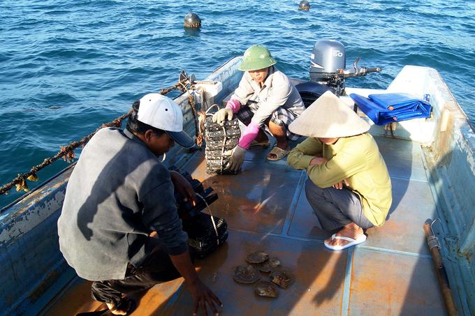 Mùa hè trên hòn đảo vào top bí ẩn nhất thế giới ở Việt Nam