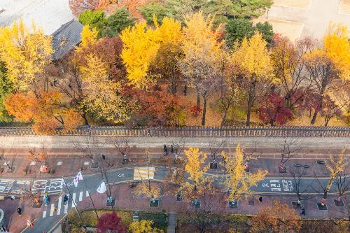 Nằm ngay cạnh các cửa ra của ga tàu điện ngầm City Hall, Jeongdong là con đường dạo phố quen thuộc của nhiều người dân Seoul. Đi hết dọc con phố chỉ mất gần 30 phút nhưng người ta có thể thưởng thức nghệ thuật, ngắm nhìn các kiến trúc cận đại Đông Tây giao hòa của Hàn Quốc thời Nhật trị.Hay chỉ đơn giản là nhâm nhi một tách café và chậm rãi đi dạo, ngắm nhìn hai hàng cây thẳng tắp thay màu lá theo mùa. Mùa hè với nét đẹp của màu xanh rì mát mắt, che dịu ánh nắng mặt trời bằng những tán lá ngân hạnh xanh ngắt rì rào. Mùa thu lại ngập tràn sự lãng mạn với sắc vàng, đỏ cam xen lẫn của lá ngân hạnh, lá phong&Jeongdong còn mang tên là con đường lát đá cung Deoksu, do nằm dọc theo bờ tường đá của cung Deoksu  một trong những hoàng cung xưa. Con đường này dài 1,5km có điểm nhấn chính là hàng cây phong, ngân hạnh được trồng đều đặn cách nhau hơn một sải tay. Những ngày thu sang, nền đường phủ đầy lá cây vàng ruộm giữa không khí yên bình, trong lành mang đến cho người tản bộ những khoảnh khắc ấn tượng khó phai.