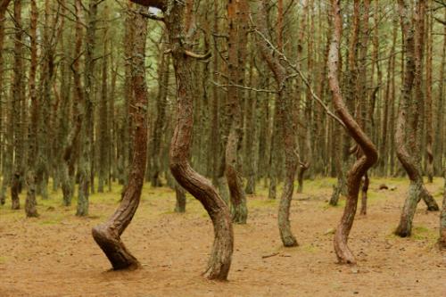 Nhiều người tin rằng trong rừng có những nguồn năng lượng bí ẩn. Ảnh:Atlas Obscura.