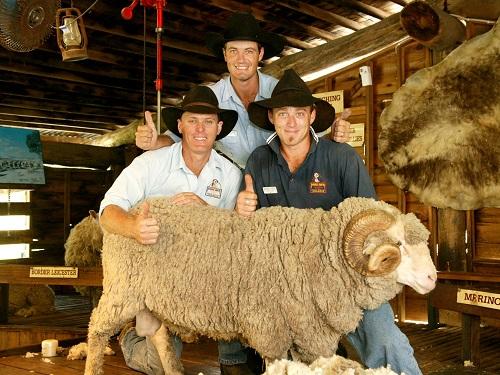 Xem biểu diễn chăn cừu ở các nông trại nổi tiếng. Ảnh: PYO Travel.