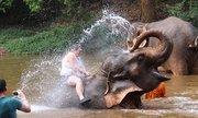 Số phận của những con voi bị tra tấn để mua vui cho khách