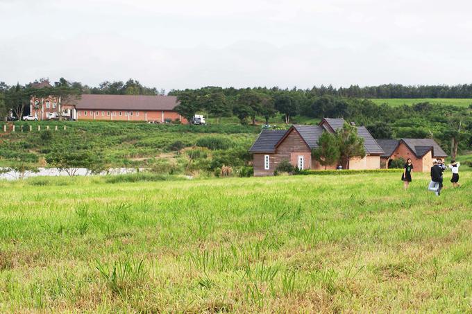 Nông trại bò sữa có cảnh đẹp như trời Âu ở Lâm Đồng
