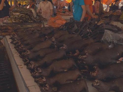 Tại bắc Sulawesi, có tới hơn 200 chợ bán thịt chó, mèo. Ảnh: News.