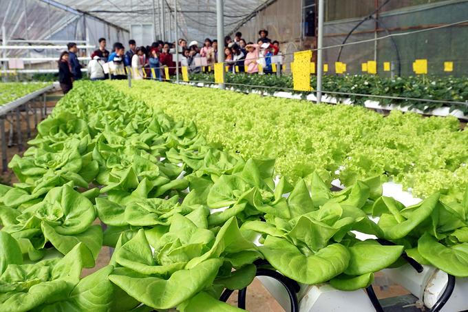 Quán cà phê cho khách ngồi trong nhà kính trồng rau ở Đà Lạt
