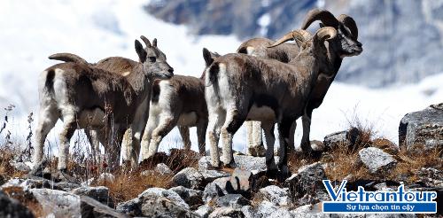 Thiên nhiên trong lành và sống động ở quốc gia đầu tiên có mức khí thải âm Bhutan.