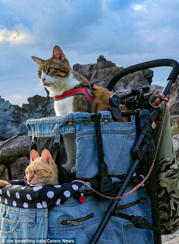 Giám đốc người Nhật đưa đôi mèo phượt 1.000 cảnh đẹp