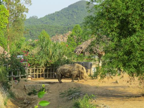 Tại vườn thú, loại động vật đang được nhân giống và bảo vệ nghiêm ngặt gồm có tê giác, hổ, báo, sư tử, hà mã, vượn đen má trắng và vượn đen má vàng.