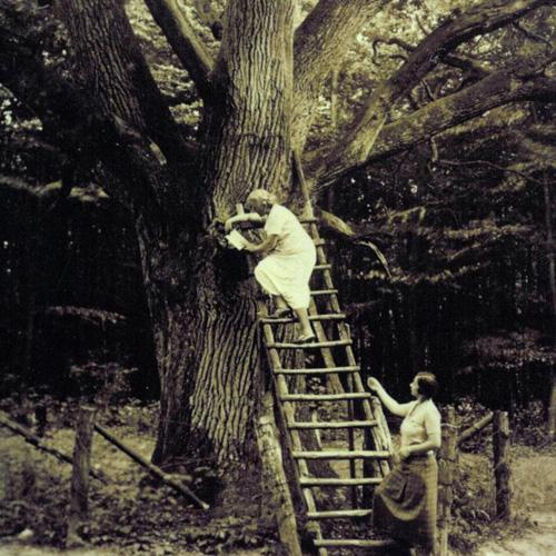 Phụ nữ trèo lên thân cây sồi để gửi thư tình trong những năm 1930. Ảnh: BBC.