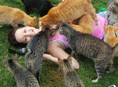 Kế hoạch lớn của trung tâm là trở thành ngôi nhà của 1.500 con mèo.