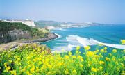 Tour Seoul - Nami - Everland chưa đến 11 triệu đồng