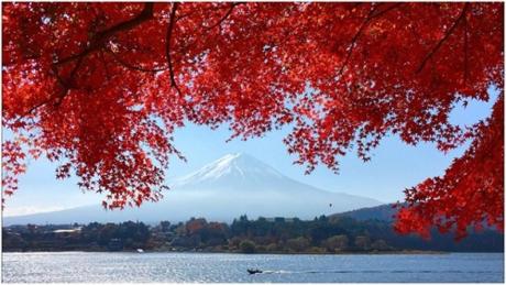 Núi Phú Sĩ  Biểu tượng của xứ sở Phù Tang trở nên rực rỡ hơn vào mùa cây chuyển lá.