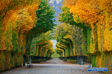 Một góc cung điện và vườn Schönbrunn ở thủ đô Vienna, một trong những điểm đến trong tour Đông Âu.