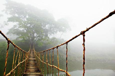 Tác phẩm mang tên Bridge Jungle Journey (Cây cầu dẫn tới rừng xanh) mới có giá từ 139 USD, cho kích thước khoảng 1x1,3m. Ảnh:Skip Nall.
