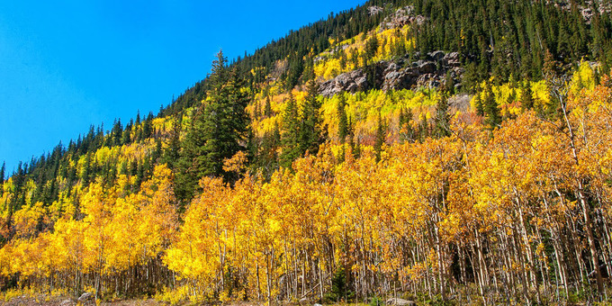 Mùa thu đến sớm nhuộm vàng những cánh rừng ở Mỹ
