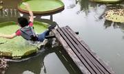Cô gái Việt ngã nhào khi bước lên lá sen gây sốt mạng xã hội nước ngoài