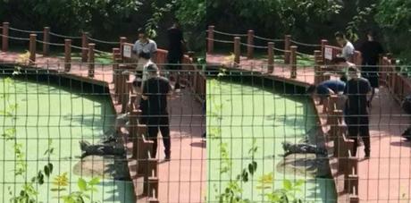 Nam du khách đạp liên tục lên con cá sấu để tạo dáng, chụp hình. Nguồn:Shanghaiist.