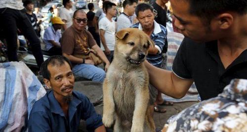 Người dân mua bán chó về làm thịt trong lễ hội ở Yulin, Trung Quốc. Ảnh: News.