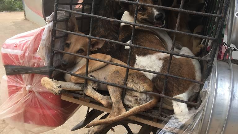 dog-restaurant-1-1-6920-1536727846.jpg