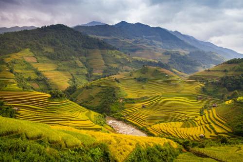 Mùa thu cũng là thời điểm thích hợp cho chuyến du lịch Sa Pa chiêm ngưỡng những ruộng lúa chín vàng, uốn quanh triền đồi hùng vĩ.