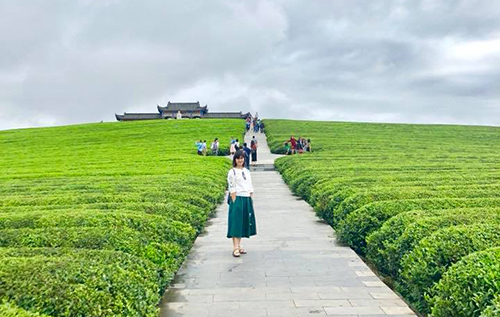 Đồi chè ở Đồng Nhân, Quý Châu, Trung Quốc.