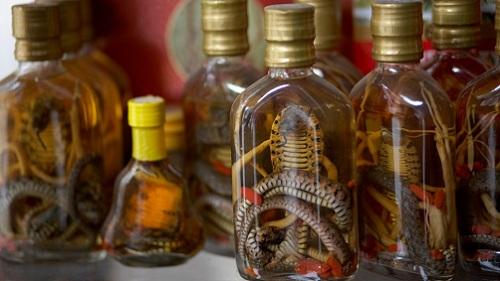 Người tiêu thụ rượu rắn có thể nhiễm những loại virus, vi khuẩn trong rắn. Ảnh:Alamy.