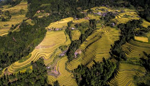 Ruộng bậc thang Hoàng Su Phì là điểm đến hấp dẫn bậc nhất khu vực Tây Bắc.