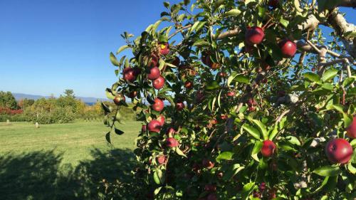 Trang trại nơi cô đến hái táo. Ảnh: CNN.
