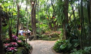 Nhà hàng giống như một khu rừng ở Thái Lan