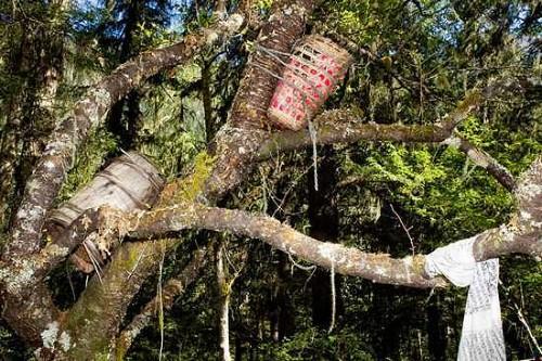 Tục mai táng người chết trên thân cây. Ảnh: WondersList.