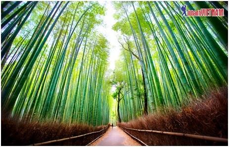 Rừng tre Sagano xanh rì, thẳng tắp ở Kyoto.