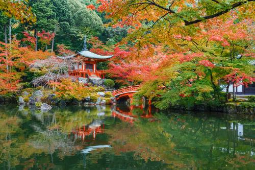 Mùa thu ở Nhật Bản với màu đỏ vàng của lá phong. Ảnh: Tugo.
