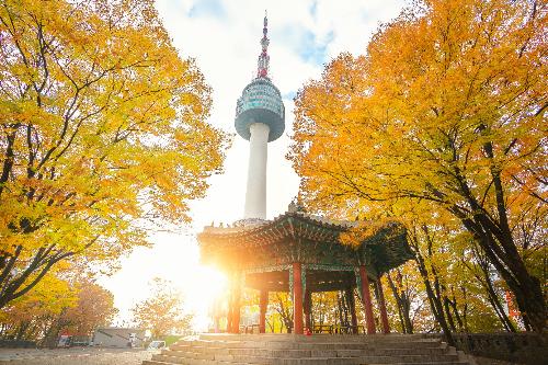 Ngay tại thủ đô Seoul, bạn hãy dành thời gian tận hưởng thiên nhiên khi tản bộ trên những đại lộ rực rỡ, ngắm nhìn nhịp sống của thủ đô. Rừng cây quanh tháp Namsan nhuộm sắc vàng đỏ là địa điểm lãng mạn cho các cặp tình nhân.Một trong những nơi không thể bỏ qua khi thăm thú Hàn Quốc là đảo Nami  bối cảnh của bộ phim Bản tình ca mùa đông nổi tiếng. Nơi đây tràn ngập những hàng cây hạnh ngân thẳng tắp, lá vàng trải khắp mặt đường, làm nao lòng những người yêu thiên nhiên và thích tận hưởng không gian lãng mạn. Đặc biệt hơn, bạn sẽ được tận hưởng không gian yên tĩnh trên đảo bởi xe đạp là phương tiện di chuyển được ưa chuộng tại đây. Dành chút thời gian dạo quanh ngắm rừng lá vàng, tránh xa khói bụi thành phố sẽ tạo nên những kỷ niệm khó quên cho chuyến đi.