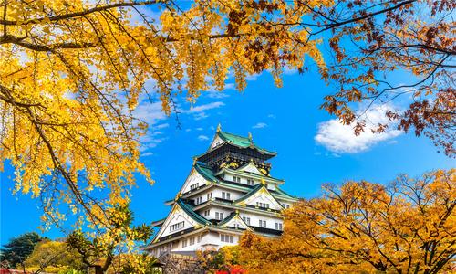 Cặp cá kình bí ẩn trên nóc lâu đài Nagoya Nhật Bản