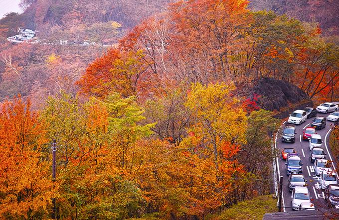 Mùa lá đỏ trên con đèo 48 khúc cua ở Nhật