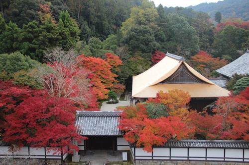 Mùa thu và mùa xuân là hai dịp đông khách du lịch nhất của Nhật. Ảnh: Holy.