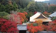 Nhật chuẩn bị ra mắt hệ thống visa điện tử