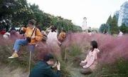 Khách Trung Quốc giẫm nát vườn cỏ hồng để tranh chỗ chụp ảnh